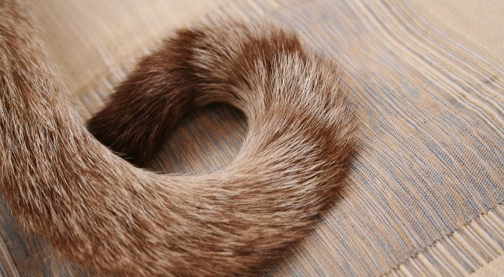 A cats tail on a wooden floor