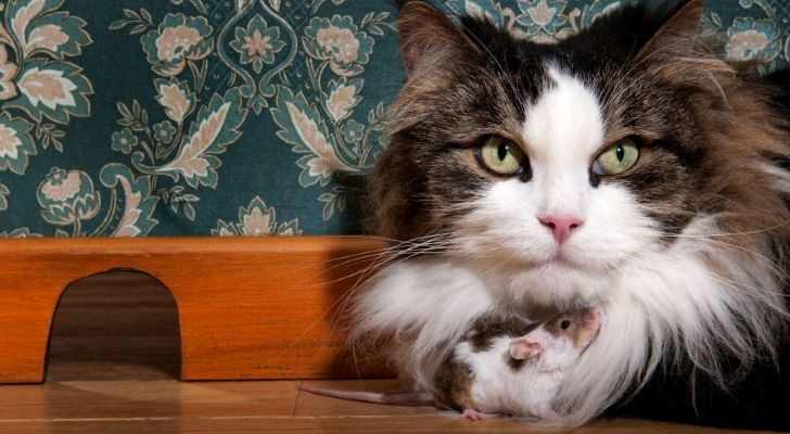 A cat waiting near a mouse hole, with the mouse sitting under the cats face