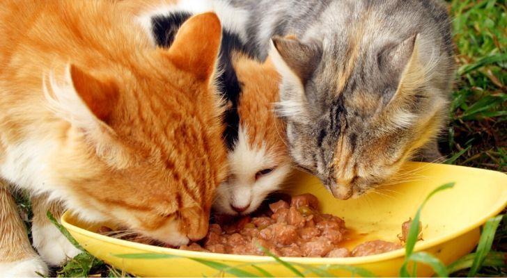 3 cats eating from a yellow bowl