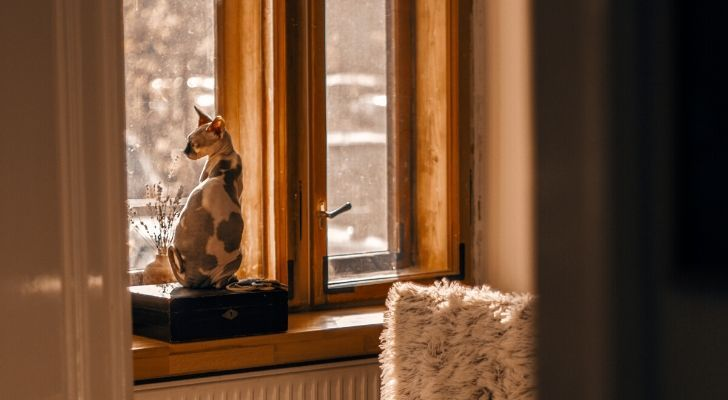 A cat staring out the window in a modern house