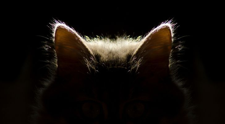 A cat sat in the dark with the light only making its ears visible