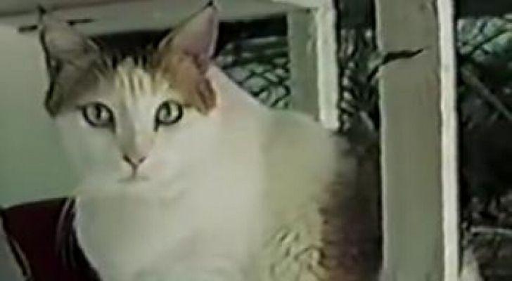 Creme Puff, the oldest cat