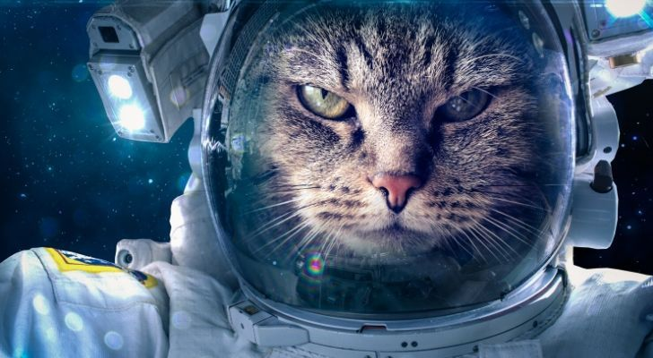 A cat in an astronaut costume