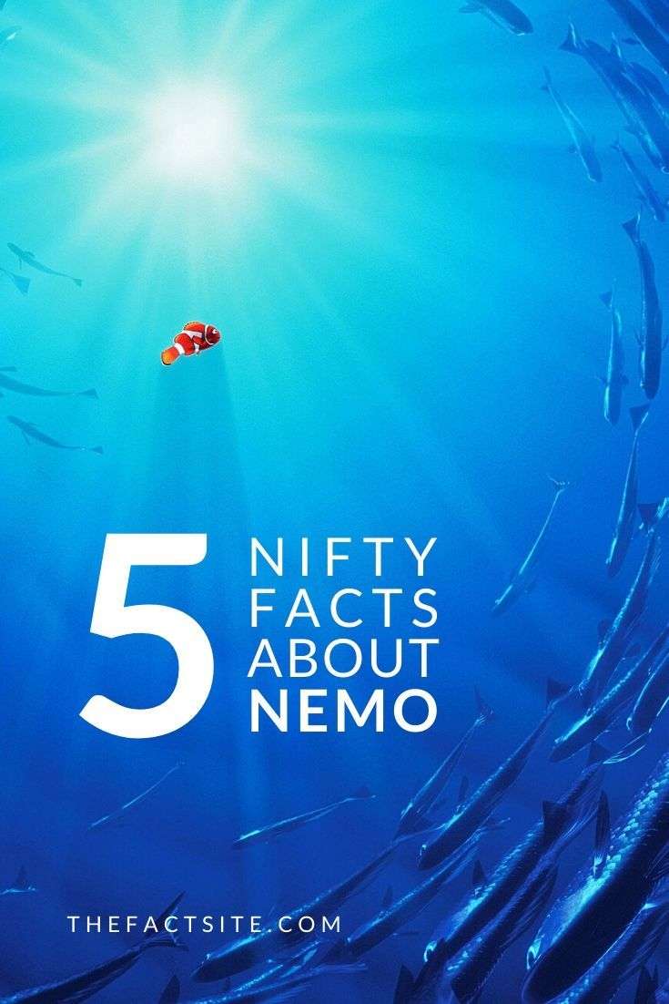 5 Nifty Facts About Nemo
