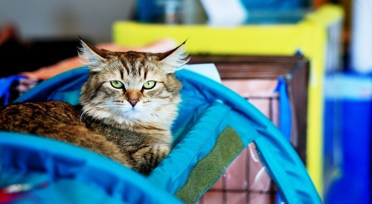 The first cat show in London