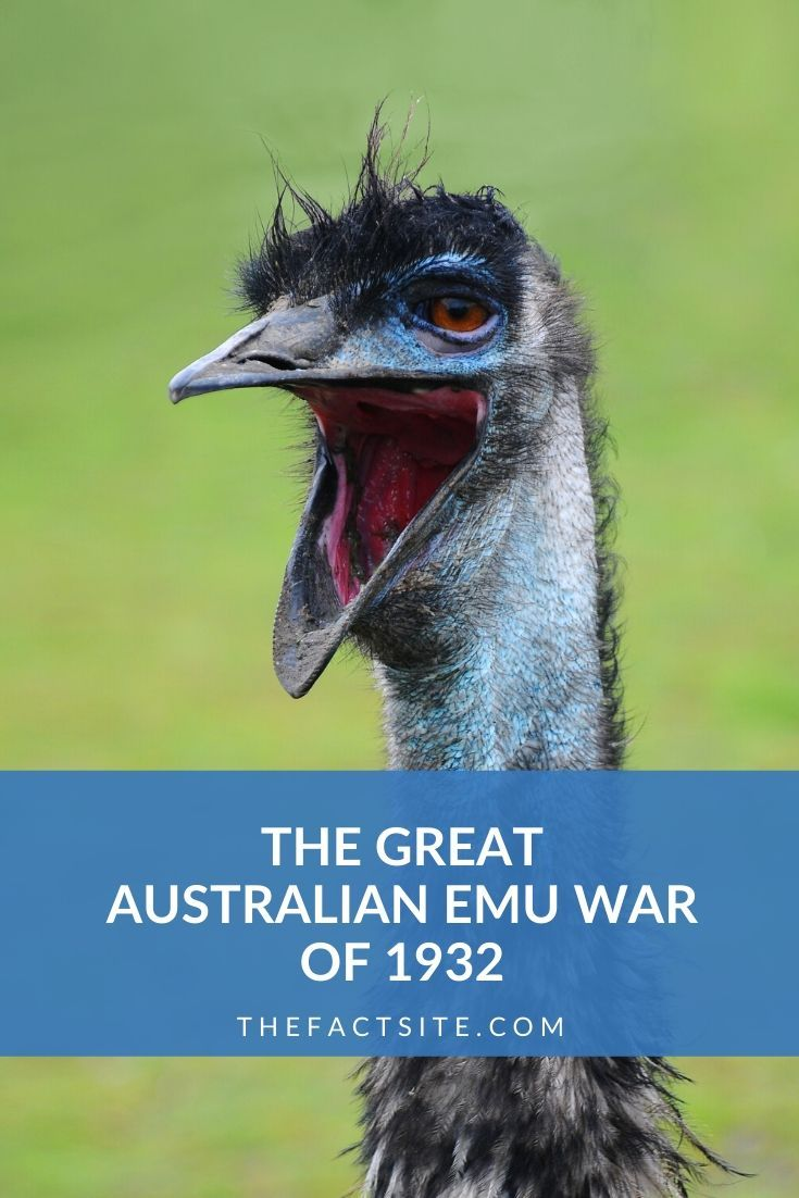 The Great Australian Emu War of 1932