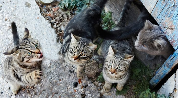 A group of cats