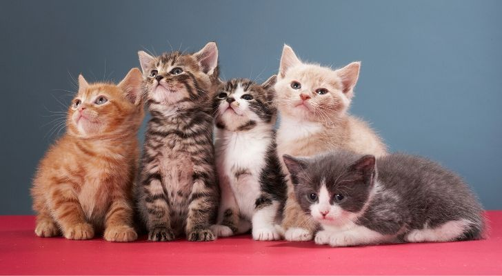 A group of kittens sat on red cloth