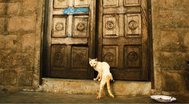 A cat standing infront of huge old-looking doors