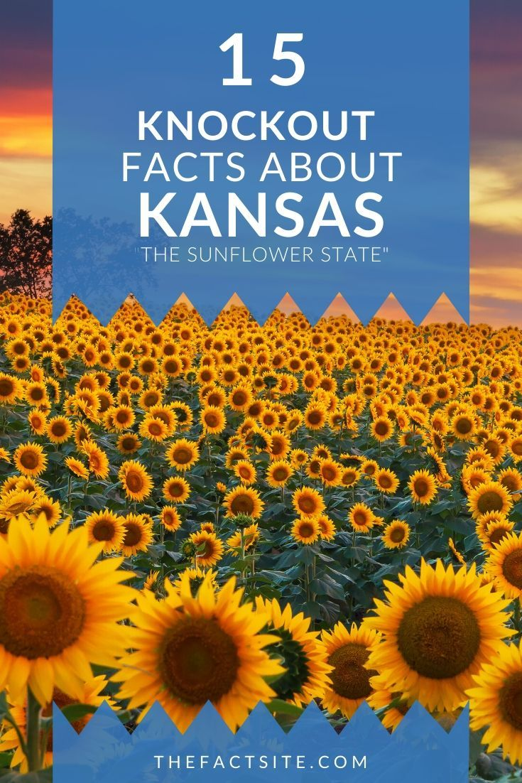 15 Knockout Facts About Kansas
