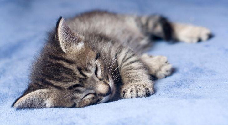 A cute kitten sleeping on its side on a blue sheet