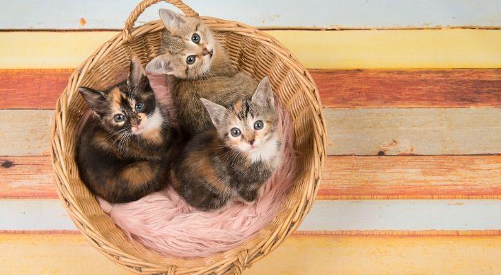 A wooden basket of kittens
