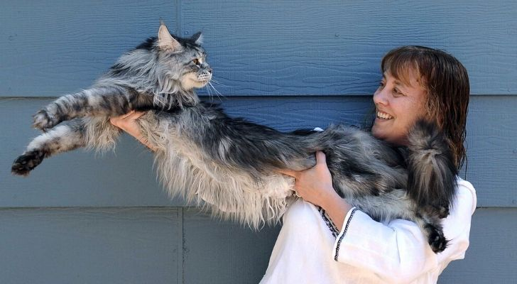 World's longest cat being held up by its owner