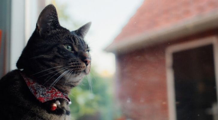 A cat gazing in the distance with a brick garage beside of it