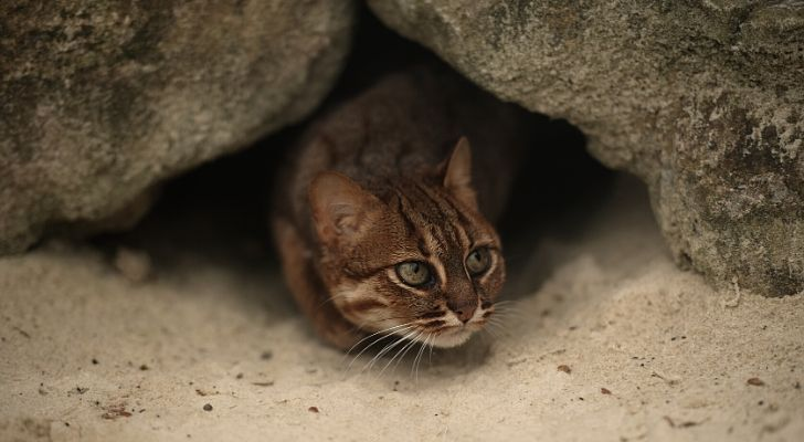 A tiny cat poking its head out of a tiny hole
