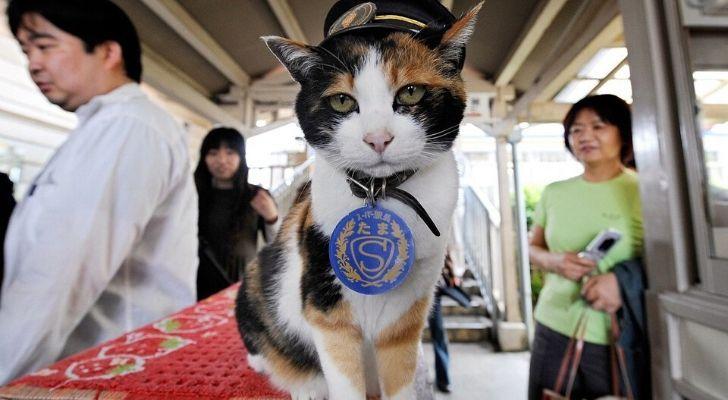 Tama the cat wearing at hat at Kishi Station