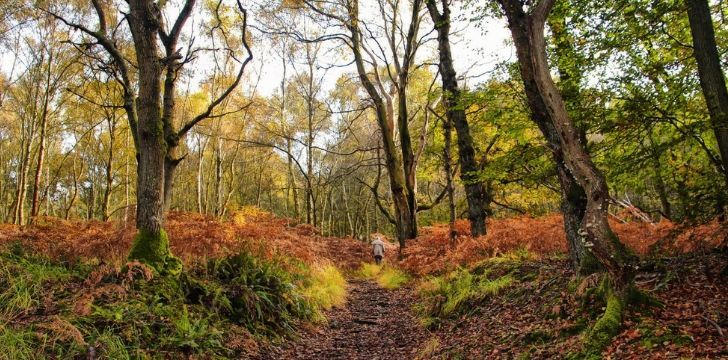 Hundred Acre Wood in England