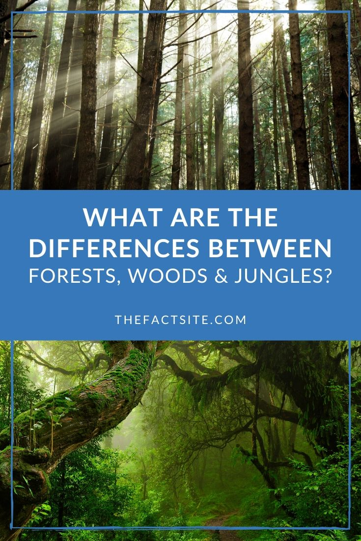 What Are The Differences Between Forests, Woods & Jungles?