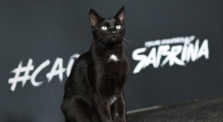 A picture of Salem the cat from Sabrina the Teenage Witch