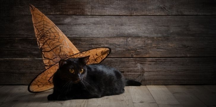 A black cat wearing a witches hat