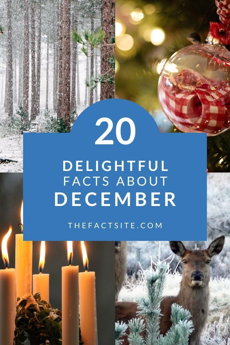 20 Delightful Facts About December