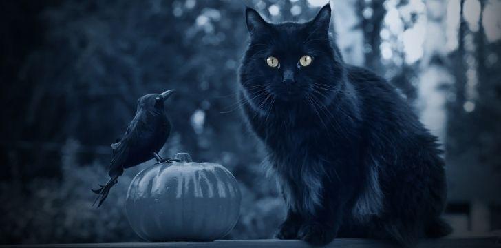 A black cat and a blackbird