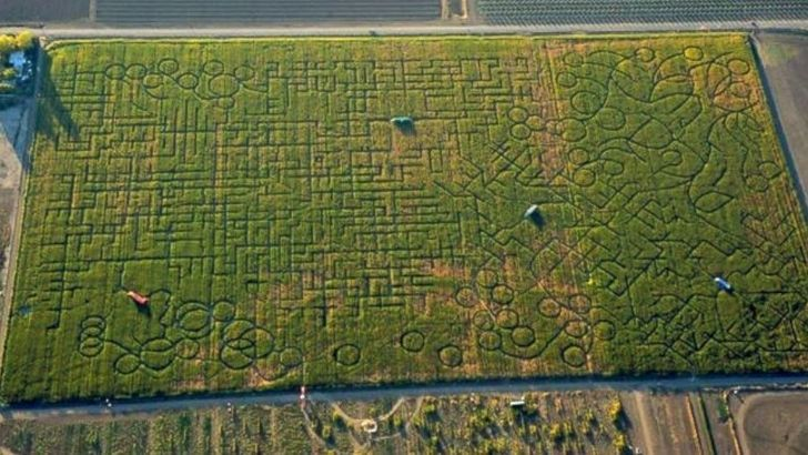 The world's largest wheat field maze