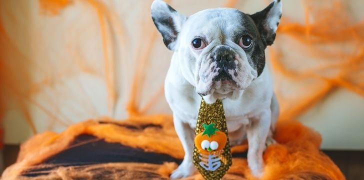 A cute dog wearing a halloween tie