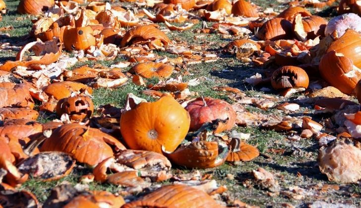 Many smashed squished and splashed pumpkins on a field