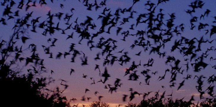 Lots of bats in the sky
