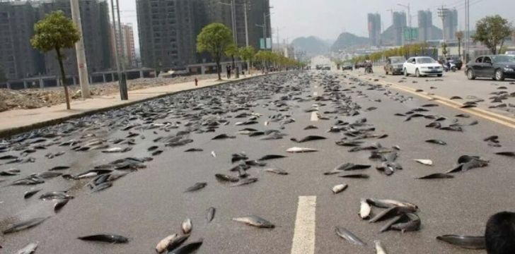 a highway coated with fish from the sky