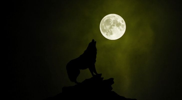 A wolf howling up to a full moon