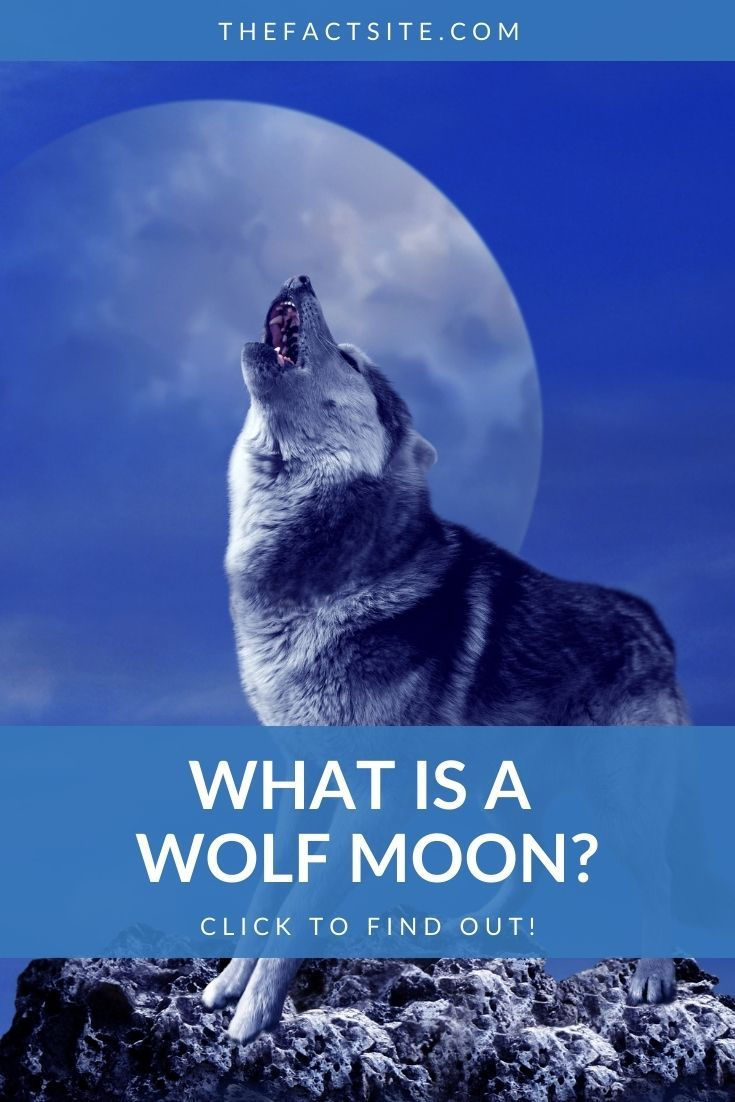 What Is A Wolf Moon?