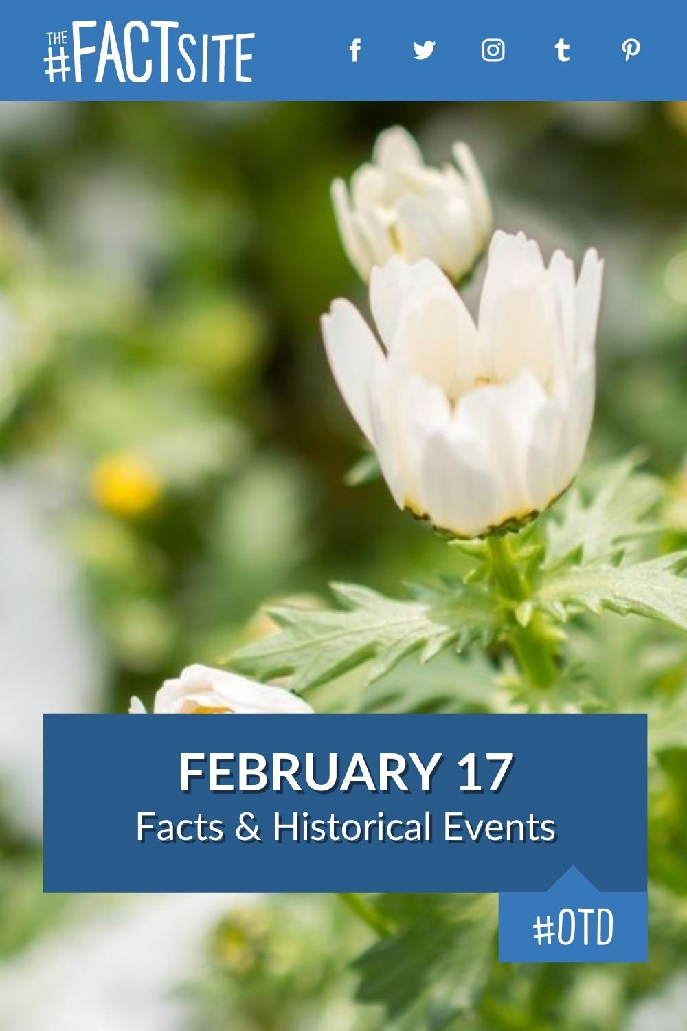 Facts & Historic Events That Happened on February 17
