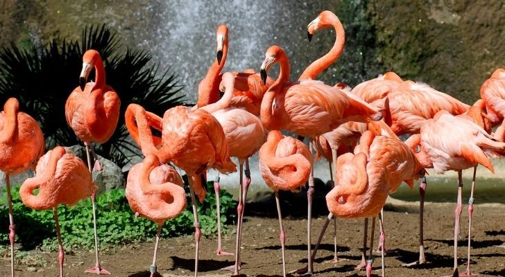 Flamingos with a waterfall behind them