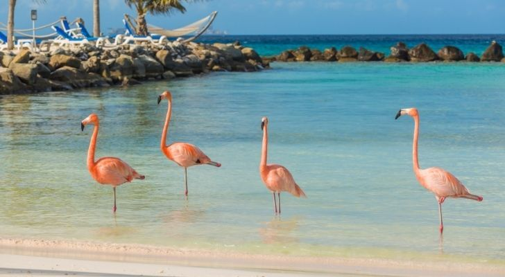 Four flamingos chilling by the beach