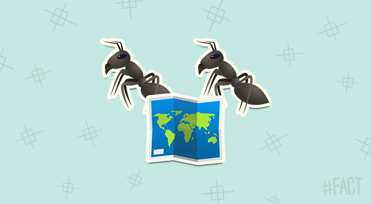 Ants leave maps for other ants when they walk.