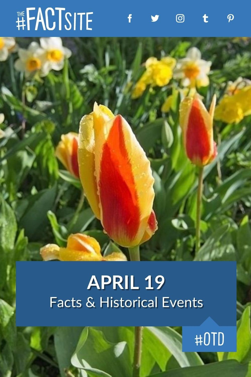 Facts & Historic Events That Happened on April 19
