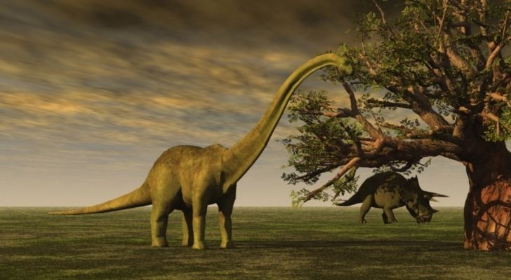 The Brontosaurus had a small brain