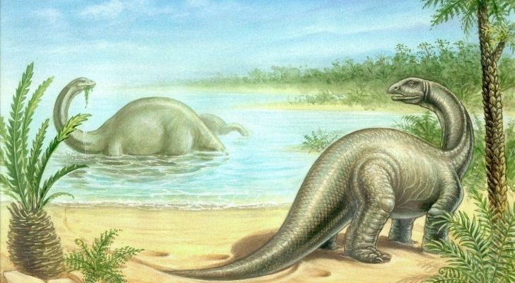 The Brontosaurus is also known as a thunder lizard