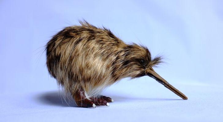 A small brown kiwi bird with shaggy hair