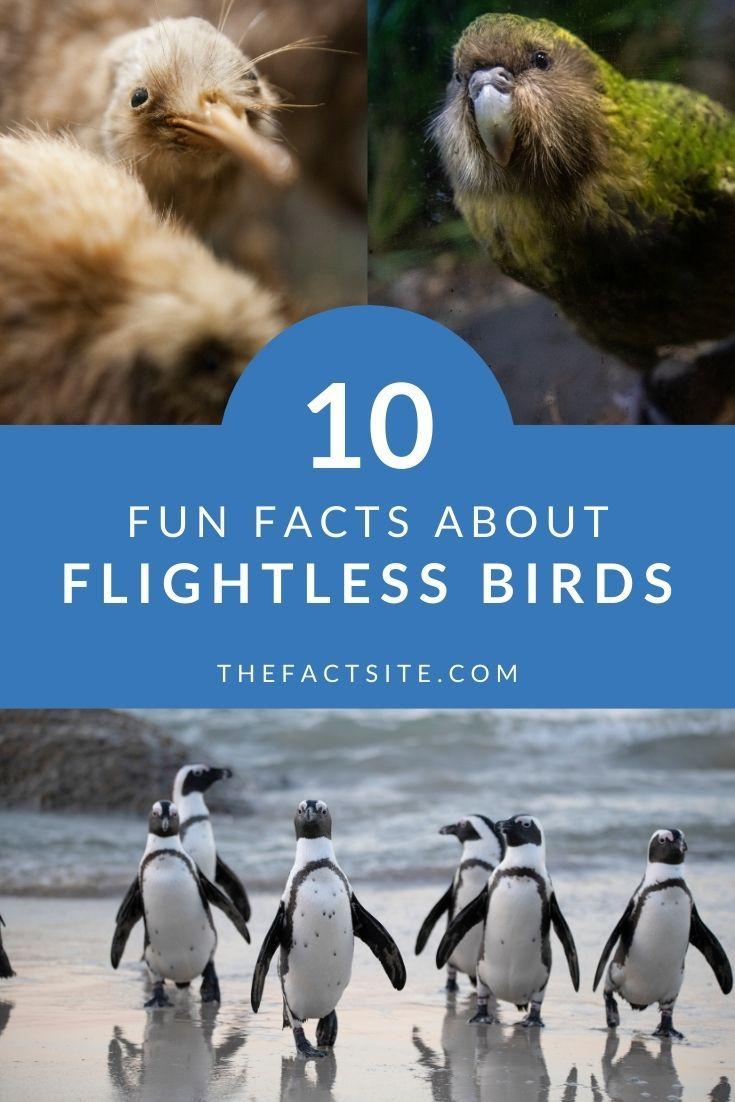 10 Fun Facts About Flightless Birds
