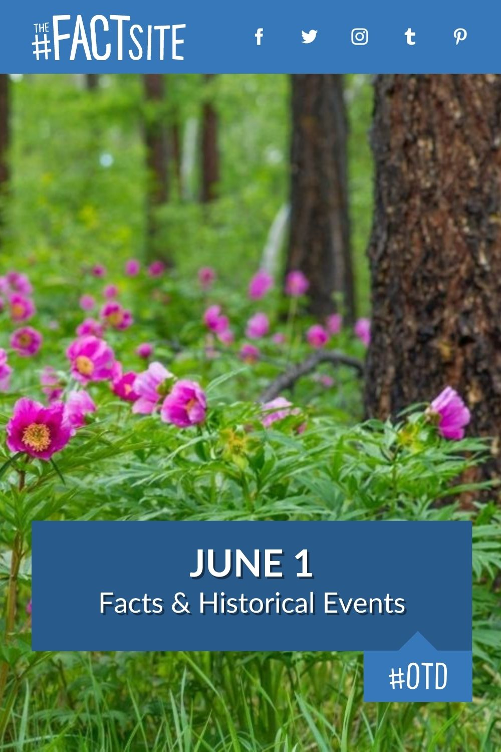 Facts & Historic Events That Happened on June 1