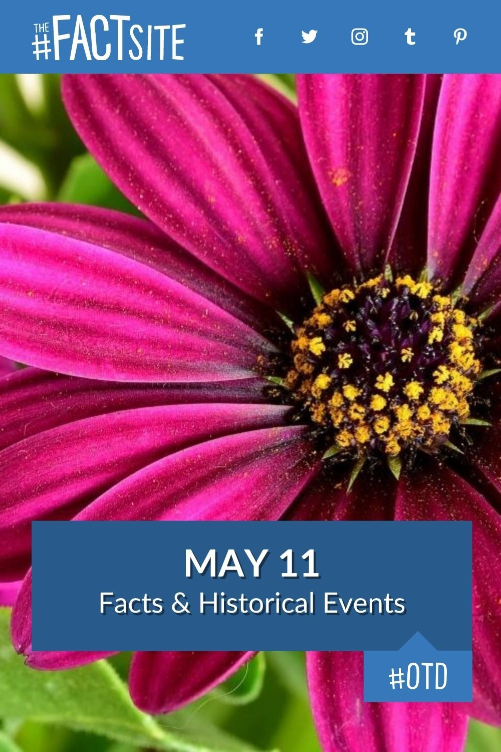 Facts & Historic Events That Happened on May 11