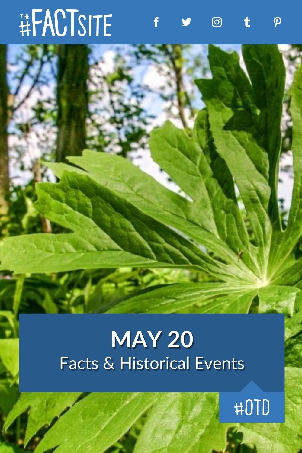 Facts & Historic Events That Happened on May 20