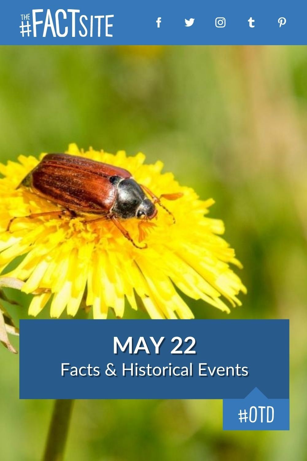 Facts & Historic Events That Happened on May 22