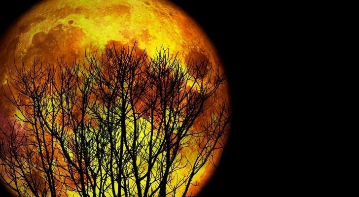 Large worm moon shining behind trees in the sky