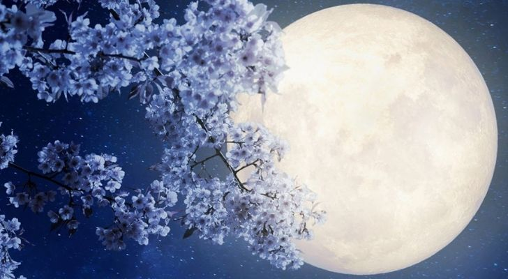 Purple blooms on a tree branch with the moon behind