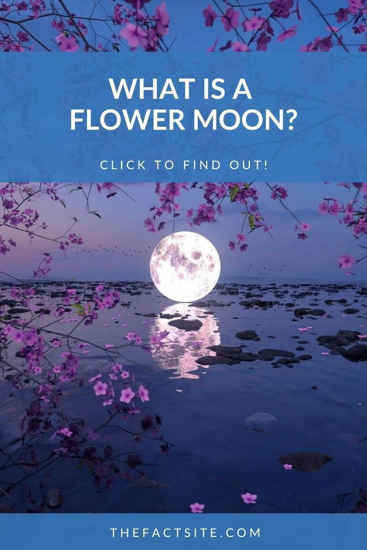 What Is A Flower Moon?