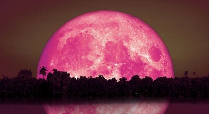 A huge pink moon behind a forest